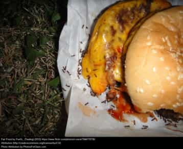 Ants eating a cheesburger